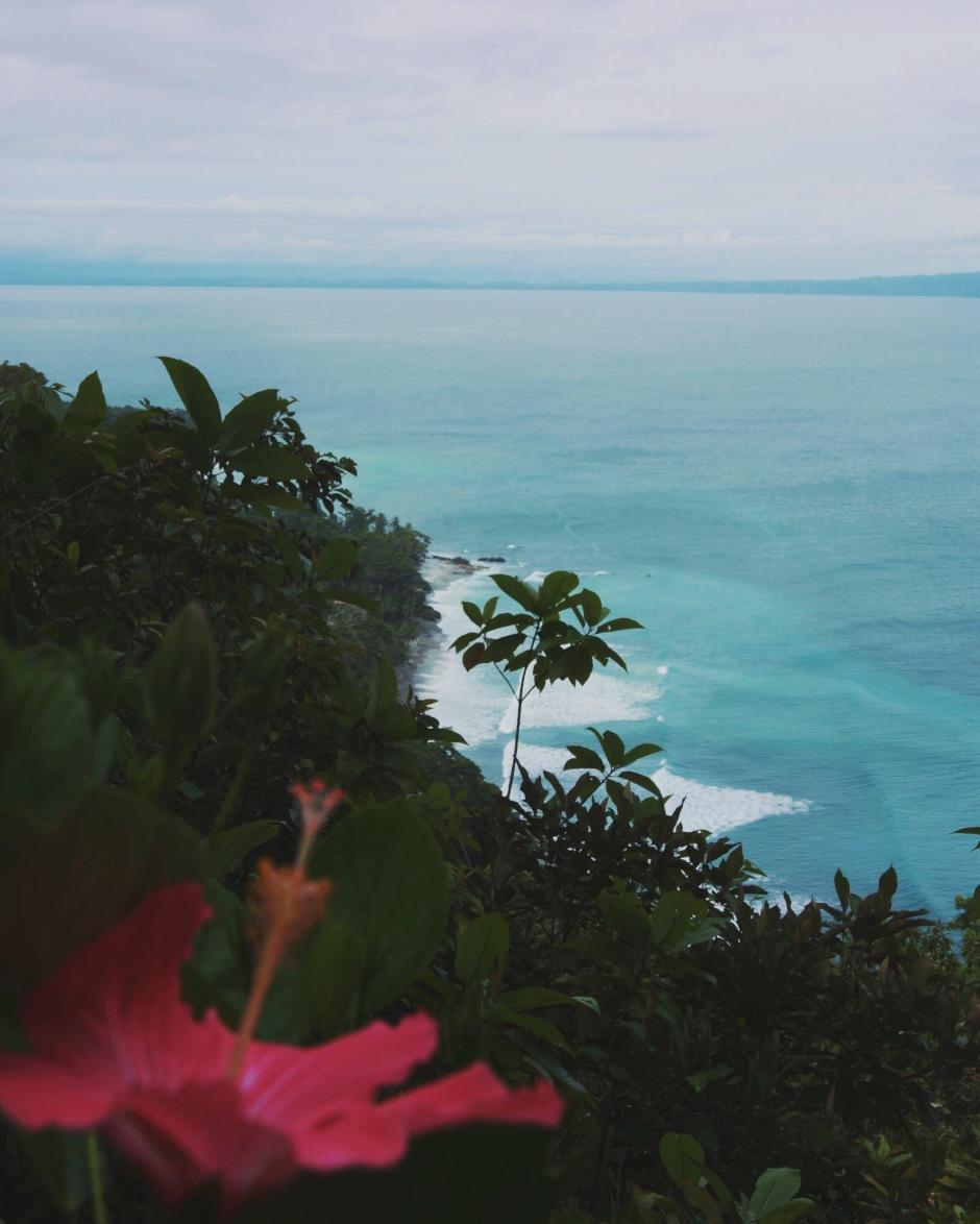 Wild & Free Blog
